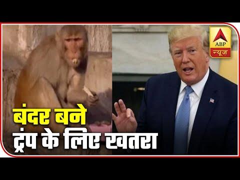 Namaste Trump: Monkey