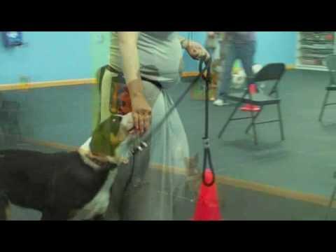 Happy Dog Training Puppy Kindergarten
