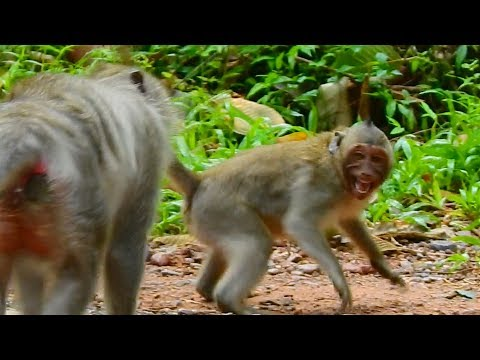 Unbelievable mama Tima try to attack orphan girl Jessie not