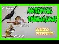 Kapas Tembak Vs Cililin Vs Cucak Jenggot Terapi Air New 2020 Terjernih Gacor(.mp3 .mp4) Mp3 - Mp4 Download