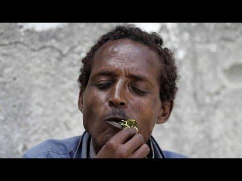 Herbal stimulant, khat derailing Djibouti's economy thumbnail