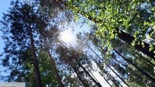 """""""Чем дальше в лес"""". Специальный репортаж Ксении Кибкало"""