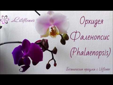 Ботанический разбор (строение) орхидеи фаленопсис