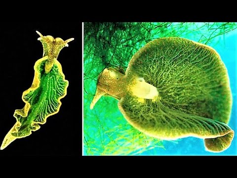 10 Underwater Creatures with WEIRD Abilities