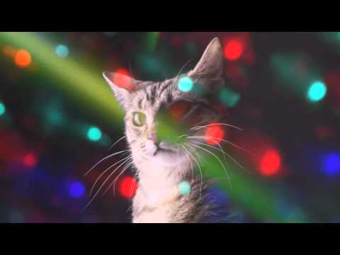 Meow Mix Song | EDM Cat Remix by Ashworth (Ayon Bootleg)