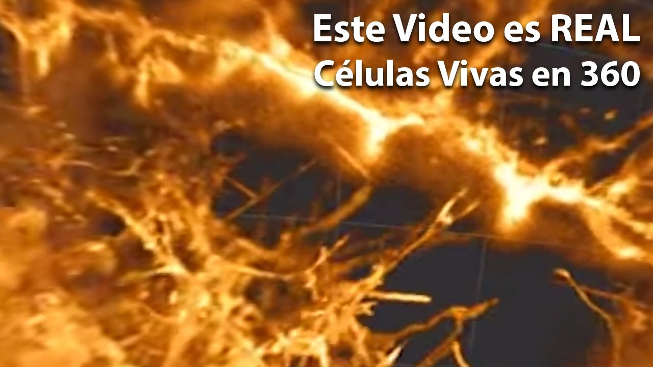 Los Videos 3D más Pequeños | @puertodeideas vlog5