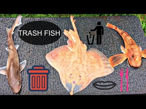 Catch and cook dogfish skate sea robin trash fish for Catch and cook fish