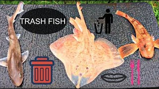 Catch And Cook (Dogfish, Skate, Sea Robin): Trash Fish Taste Test