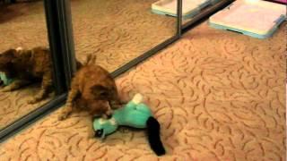 Бій з іграшкою..MP4