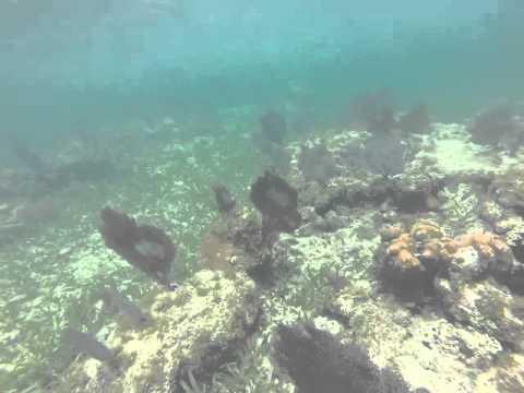Snorkelling in Jamaica #1