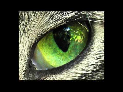 Eye Of Tiger - Survivor [Bass Boosted]
