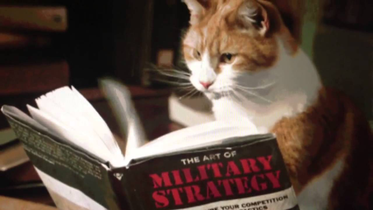 Cat Reading Military Strategy  Youtube
