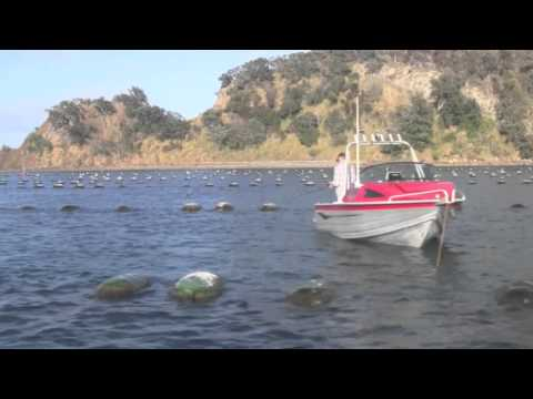New Zealand Mussel Farms & Sport Fishing