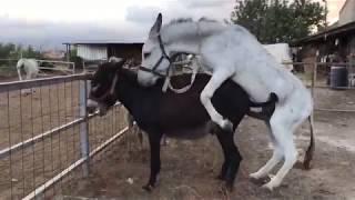 İlginç Hayvan Videoları 1