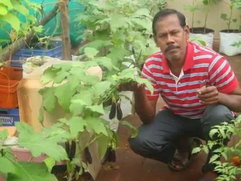 Maddi Thottam Organic(terrace garden) Chennai Ashoknagar 9791052529