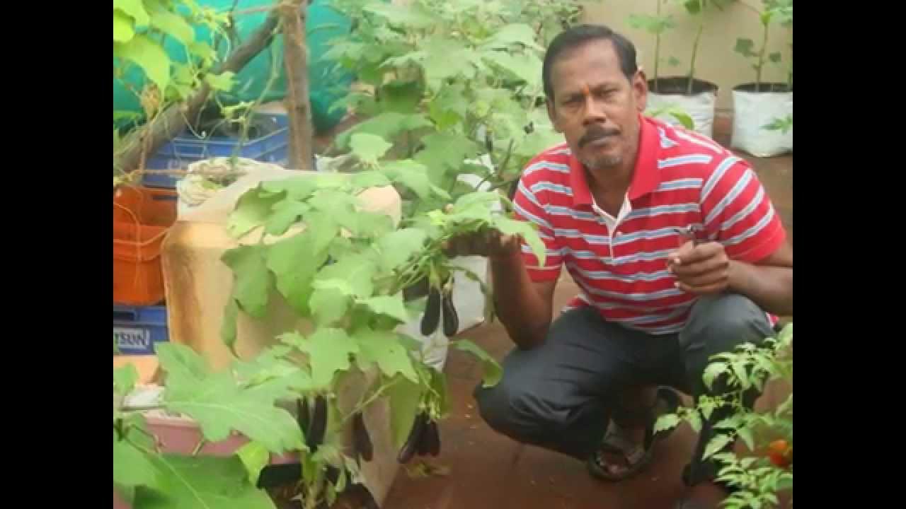 Maddi Thottam Organic Terrace Garden Chennai Ashoknagar