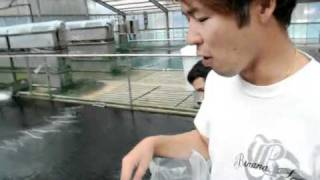 FD Food Interview with Kenny Baba - Testing new food at Momotaro Koi Farm.mp4