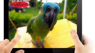 Смешные попугаи до слез
