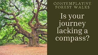 Further Lessons from the Contemplative Forest