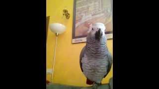 Papagalul Paulie face spectacol part.8
