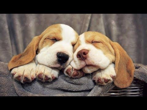 Cute Dog & Cat Vine Compilation 2019 NEW | Cute Animals  - Cute Pets Vine Videos #5