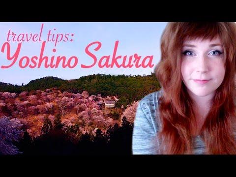 Travel Tips: Yoshino Cherryblossom  |  Nara, Japan