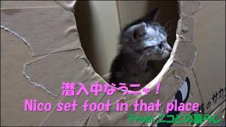 幼猫ニコ#6(終) ニコが初めて足を踏み入れた先は今とは少し違った…… Nic...