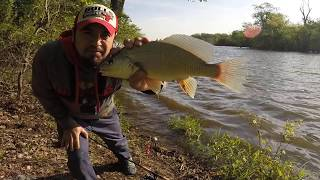 Pesca de Mojarras Con Anzuelo - Pescando Mojarras De rió - pesca