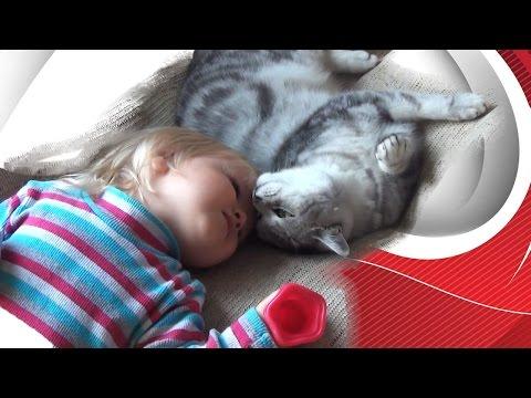 Шотландская кошка и ребенок. VLOG