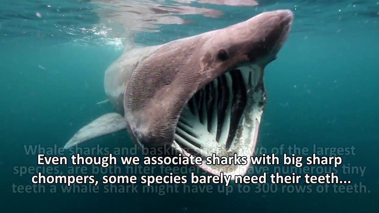 good facts about sharks