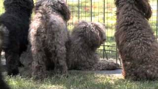 Dog Boarding Kennels Canning Vale Snips & Snoozes Wa