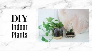 DIY HOUSE PLANTS that are easy to look after!
