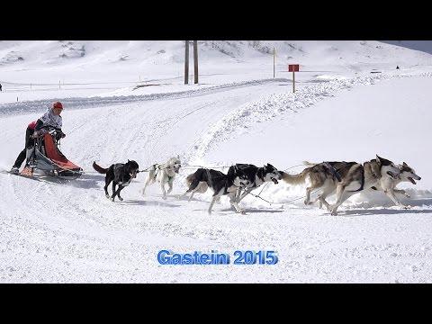 Schlittenhunderennen in Sportgastein 2015 Sony 4 K