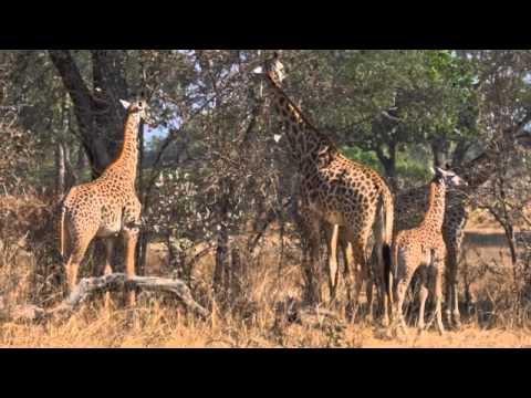 Animali d'Africa