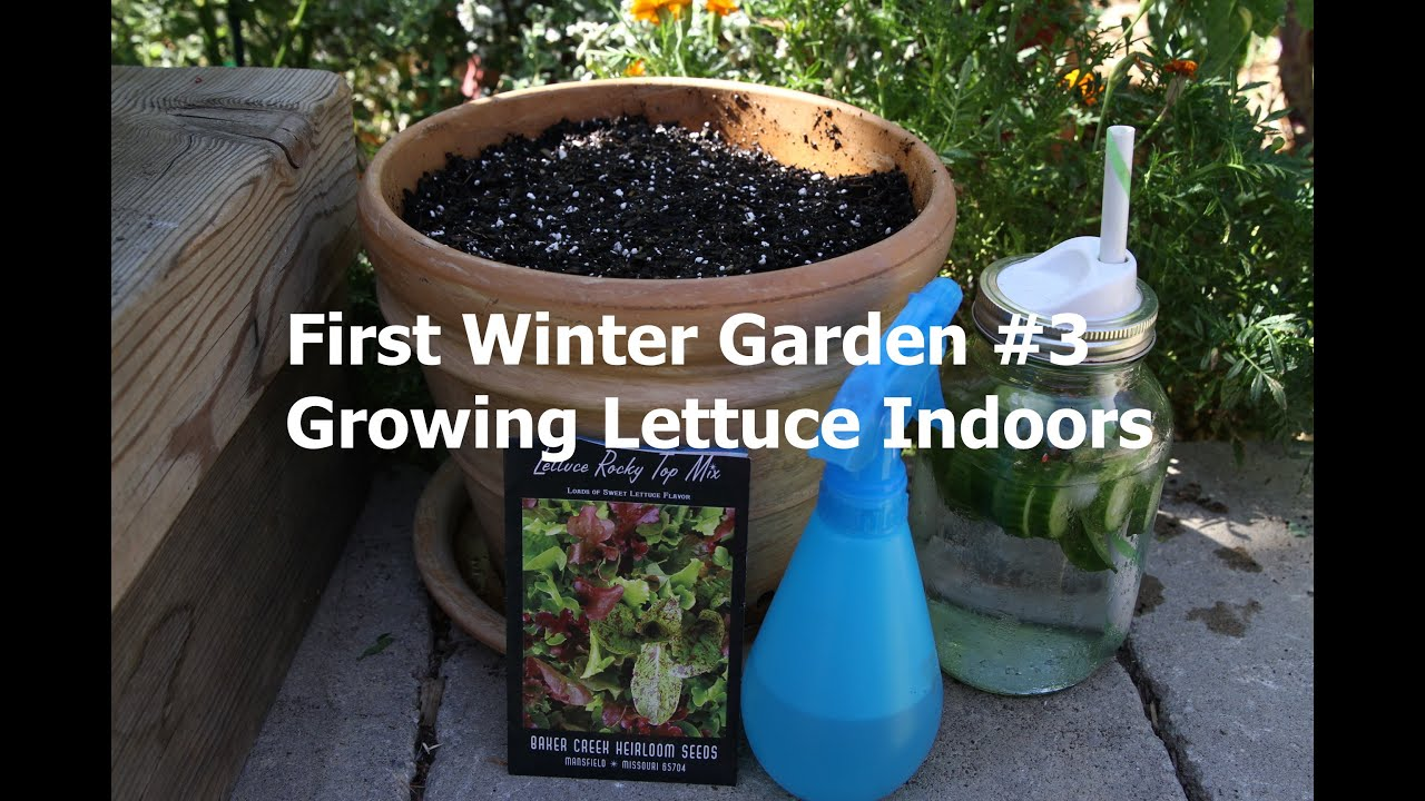 how to grow lettuce indoors first winter garden series 3 youtube