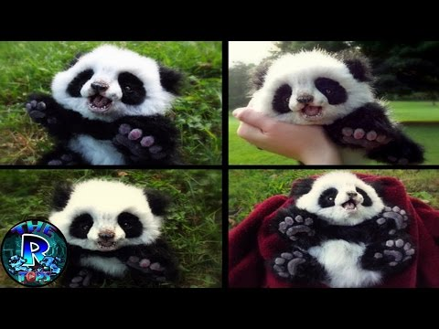 7 Animales Adorables Que Podrían Matarte