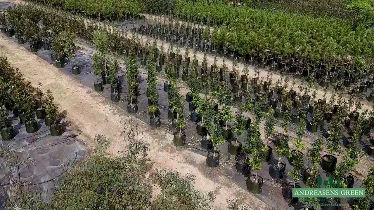 Andreasens Green Wholesale Nurseries   Create Great Landscapes