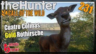 The Hunter Call of the Wild ★ Gold Rothirsche und ein Hot Spot [231] Let's Play Deutsch