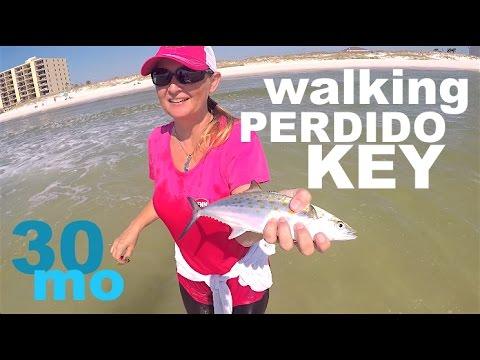 """BEACH FISHING - Chasing Spanish Mackerel"""" perdido key florida"""