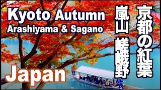 KYOTO JAPAN 京都観光・嵐山の紅葉の名所 Autumn Leaves in Kyoto - Arashiyama, Sagano 嵯峨野トロッコ、天龍寺、常寂光寺、宝厳院、日本の紅葉