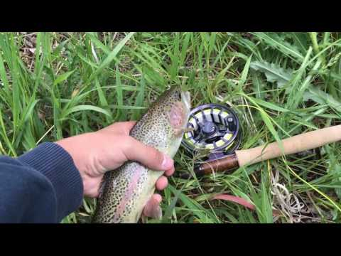 Ten Mile Creek Fishing