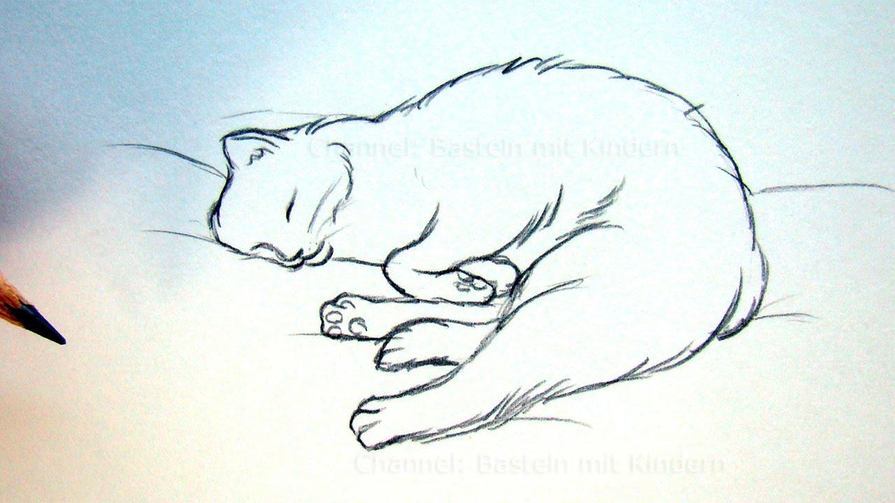 katze zeichnen lernen tiere zeichnen und malen schlafende katze diy youtube. Black Bedroom Furniture Sets. Home Design Ideas