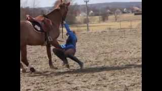 Bêtisier cheval n°3 : refus, drôles de sauts, chutes...