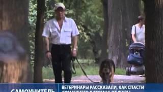 Ветеринары не советуют часто купать собак в жару(Домашние животные страдают от жары не меньше людей. Смотрите на видео РИА Новости, как уберечь домашнего..., 2011-07-20T12:22:47.000Z)