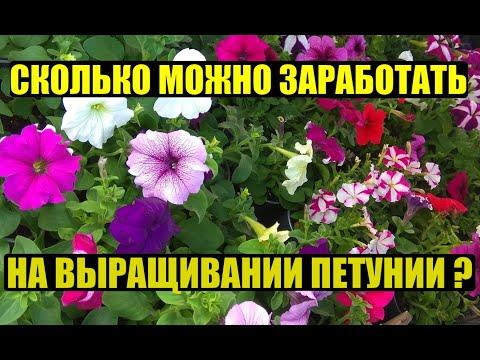Выгодно ли выращивать ПЕТУНИЮ?