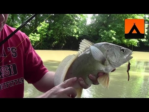 Fishing On The Green River Near Liberty, Kentucky - Catfish & Drum