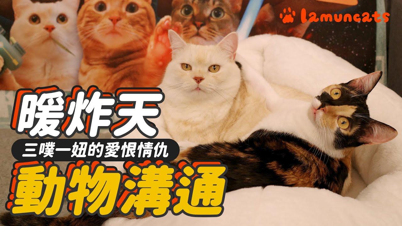 為奴才而來的貓!動物溝通四貓心聲┃拉姆有幾噗 ♧