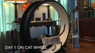 One fast cat exercise wheel review