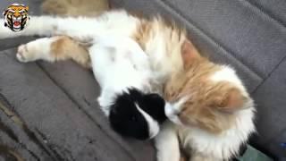 смешные кошки до слез!...