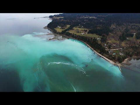 Pacific Herring: Small Fish, Big Problem - December 2019 Update